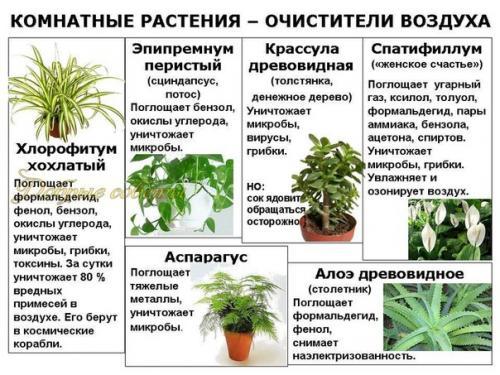 Не полезные растения в домашних условиях