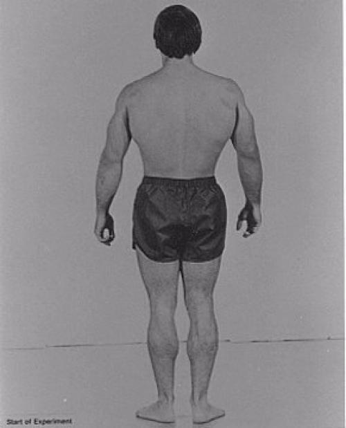 Колорадский эксперимент 28 кг мышц за 28 дней. Как нарастить 28 кг мышечной массы за 28 дней.