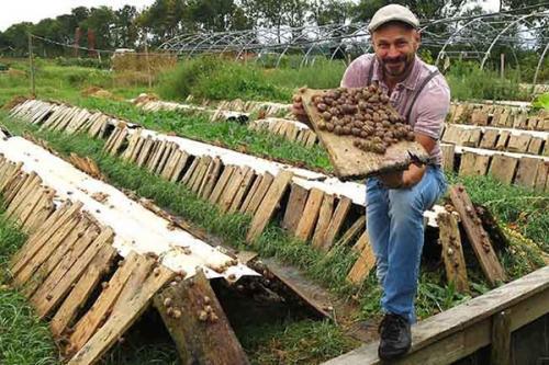 Разведение улиток в помещении. Разведение виноградных улиток: от бумажных вопросов к фермерским работам