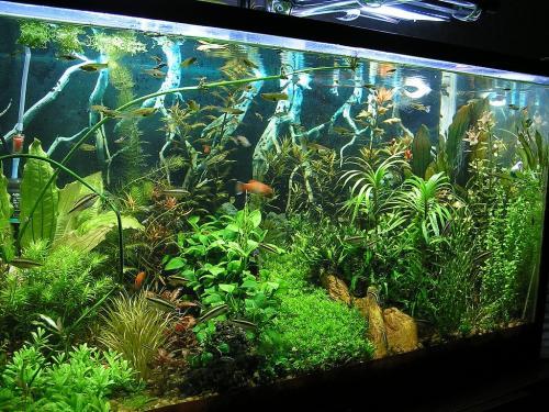 Надо ли выключать свет в аквариуме на ночь у рыб. Нужно ли выключать свет в аквариуме на ночь