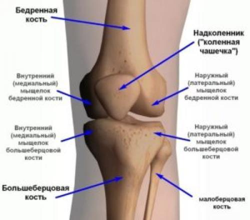 Питание для восстановления суставов. Что нужно, чтобы ткани хрящей не разрушались