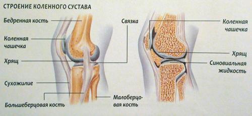 Препараты для восстановления связок. Соединительная ткань