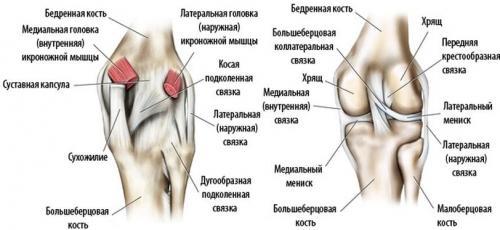 Боль в колене сбоку. Почему болит колено с внутренней стороны: причины, лечение, профилактика