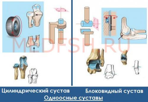 Виды суставов по форме и числу осей вращения. Классификация суставов