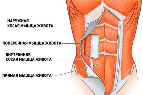 Диета при диастазе у мужчин. Для начала немного анатомии