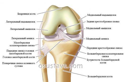Сколько по времени заживает разрыв связок коленного сустава. Причины разрыва связок колена