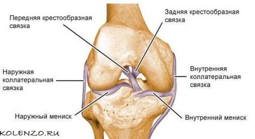 Пкс правого коленного сустава, что это. Крестообразная связка коленного сустава: анатомия, травмы, лечение