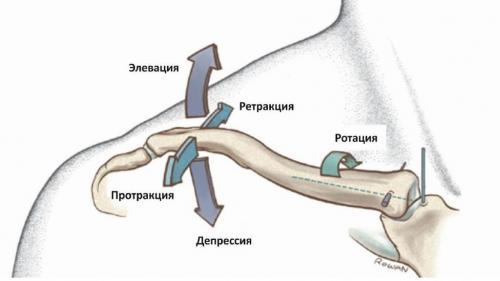 Акромиально-ключичный сустав движения. Анатомия акромиально-ключичного сустава