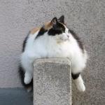 Вредные привычки, провоцирующие лишний вес!