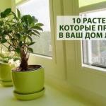 * 10 растений, которые принесут в ваш дом любовь, семейную гармонию и счастье *.