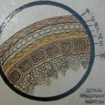 Цельнозерновая мука имеет множество названий: мука грубого помола, обойная мука, зерновая, цельносмолотая мука, цельная.